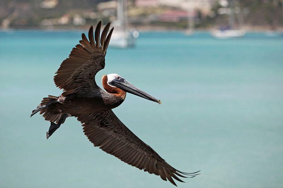 St Martin Island Animals